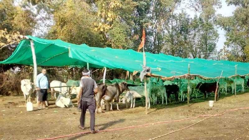 आदर्श प्रयास : ग्रामीणों ने बनाई गो-शाला, फसल नुकसान और सड़क दुर्घटना घटी